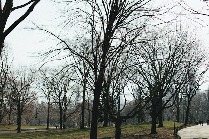 bare tree branches in central park not quite Spring yet