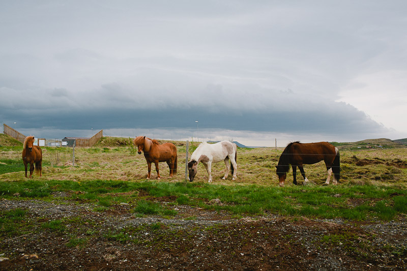 icelandic-horses-iceland-wedding-photographer-janice-yi-photography-12