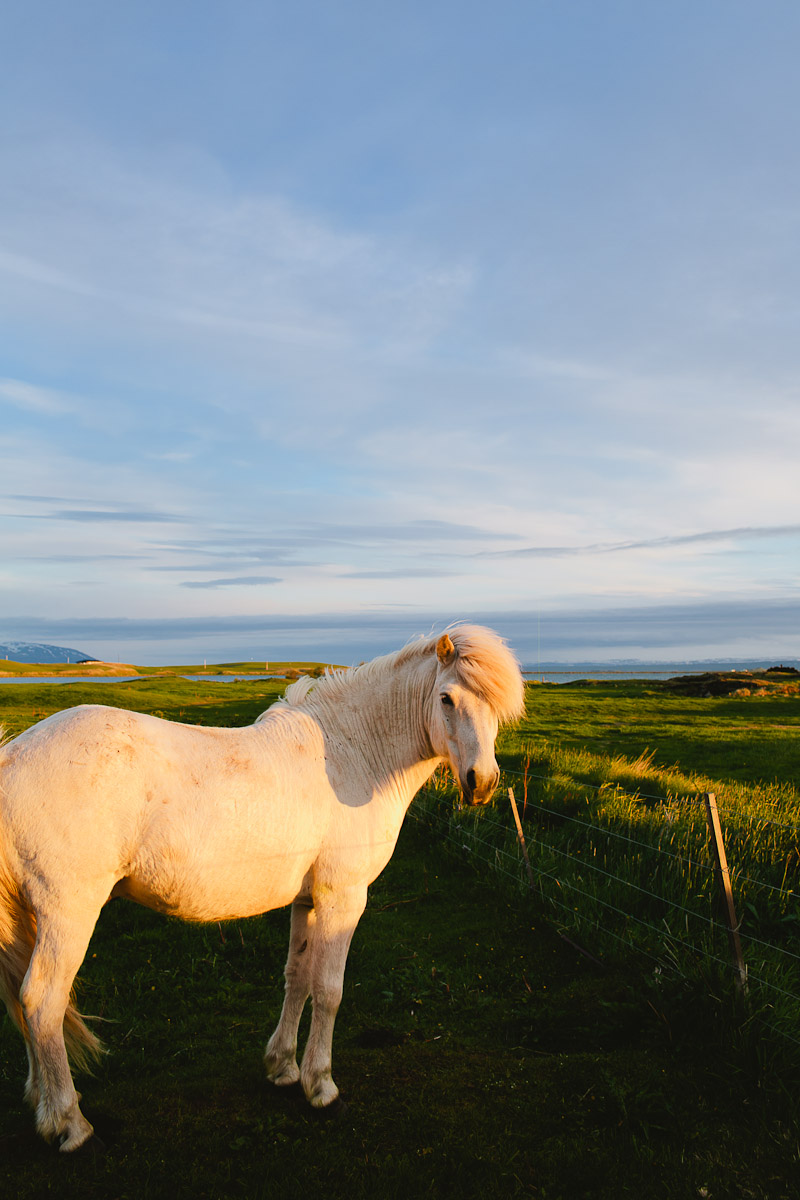 iceland-wedding-photographer-icelandic-horses-janice-yi-photography-60