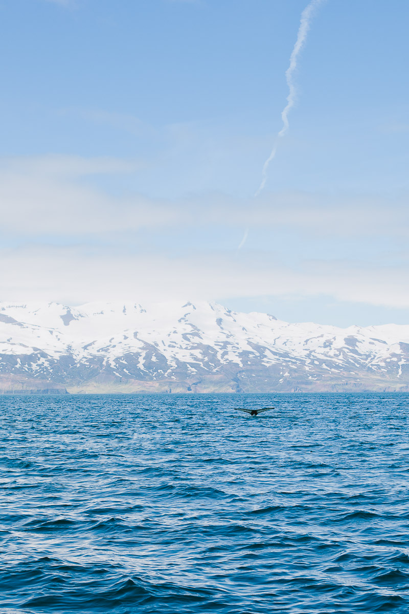 iceland-wedding-photographer-whale-watching-janice-yi-photography-66