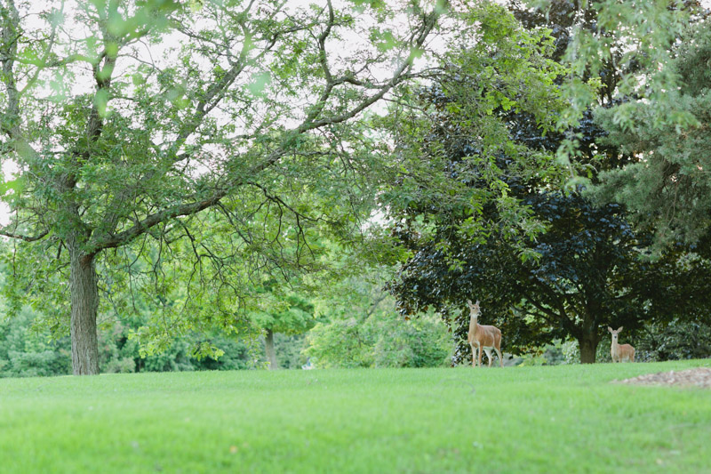 dundas-valley-golf-course-deers-1