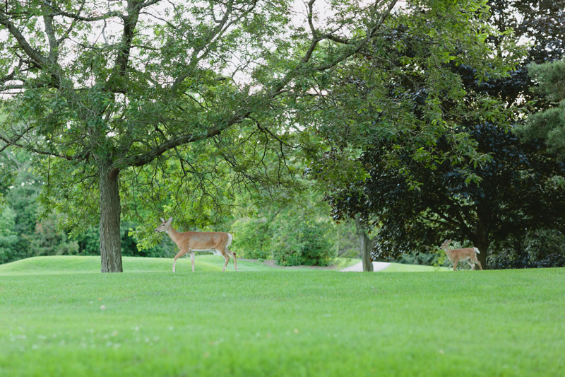 dundas-valley-golf-course-deers-2