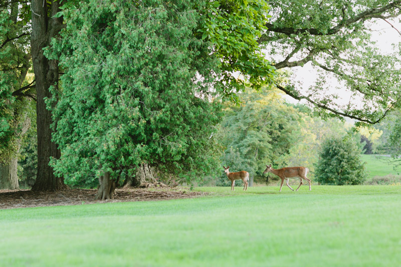 dundas-valley-golf-course-deers-3