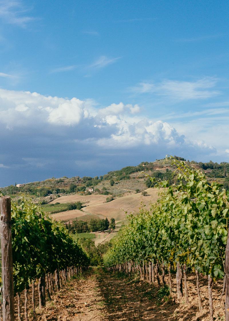 montepulciano vineyard tuscany