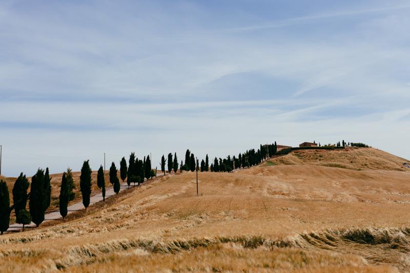 cyprus trees tuscany