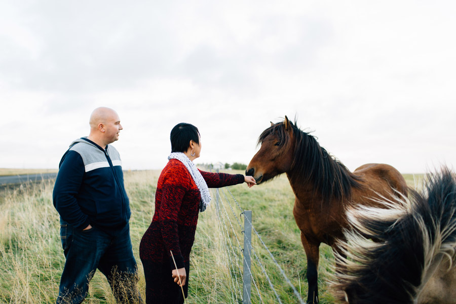 couples portrait session icelandic horses