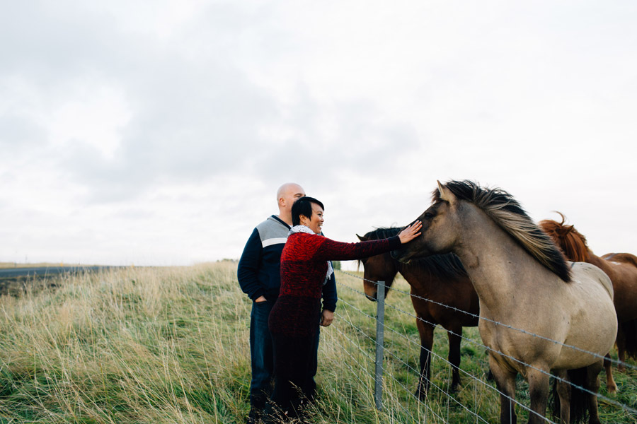 Icelandic horses pictures