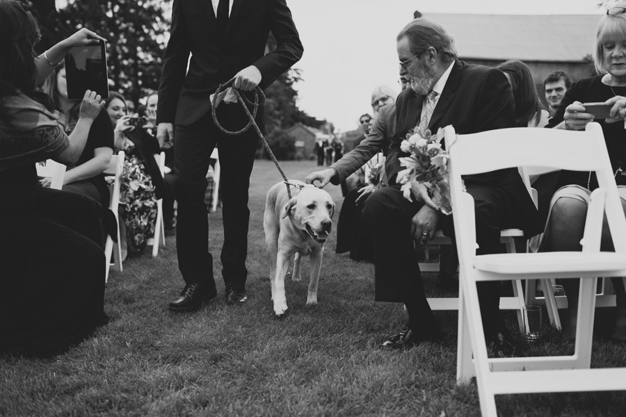 pet ring bearer