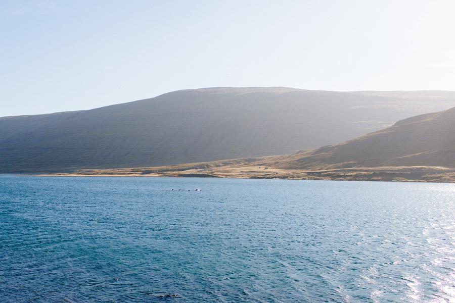 Iceland Westfjords travel