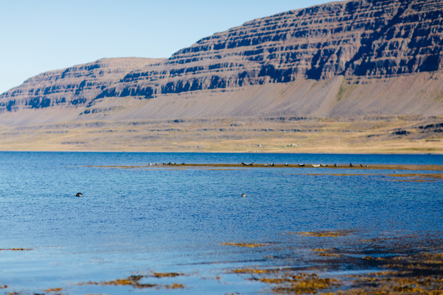 Iceland Westfjords pictures