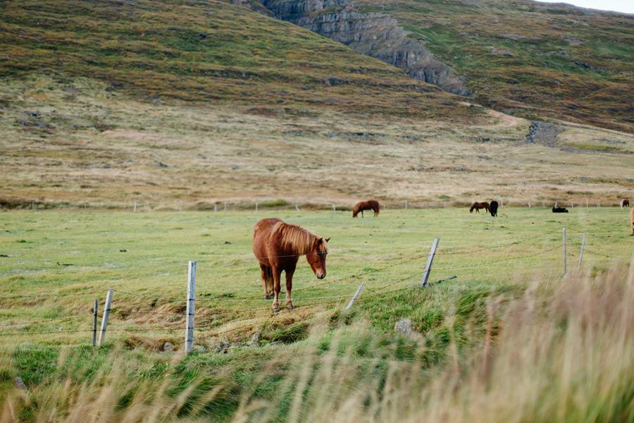 Iceland Westfjord travel photography