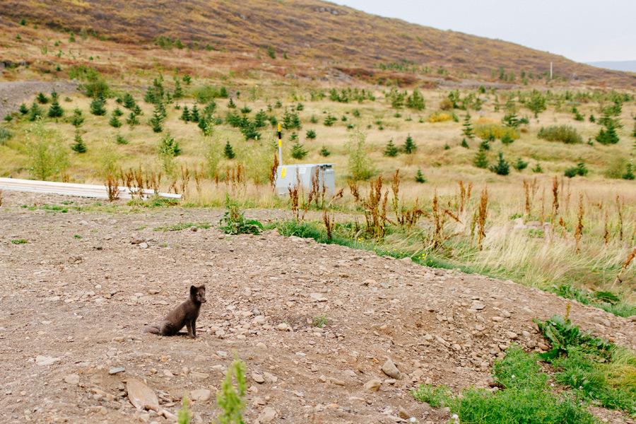 065-Iceland-travel-photography